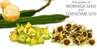 The Power of Moringa Seed and Coenzyme Q10