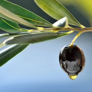 What is Squalane (Olive Squalane) and why is it so beneficial in skin care